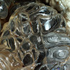 amorphous opal via underthescopeminerals.tumblr.com