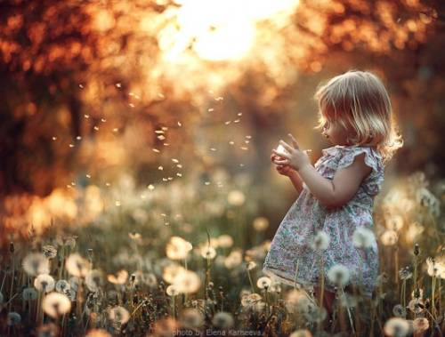 small girl in dandelions