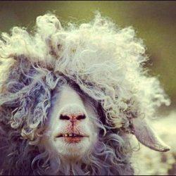 capricorn-goat-9th-house-astrology