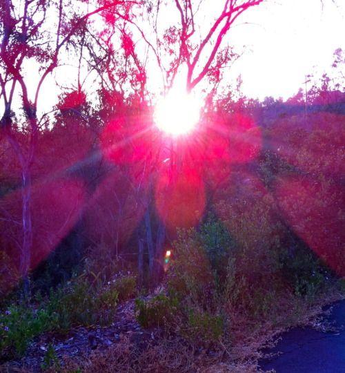 sun-midheaven-astrology