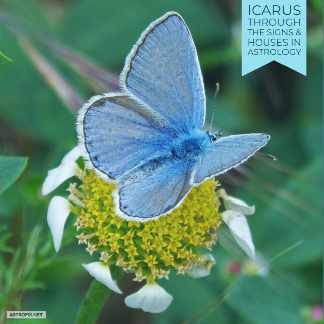 Icarus through the Signs & Houses in Astrology